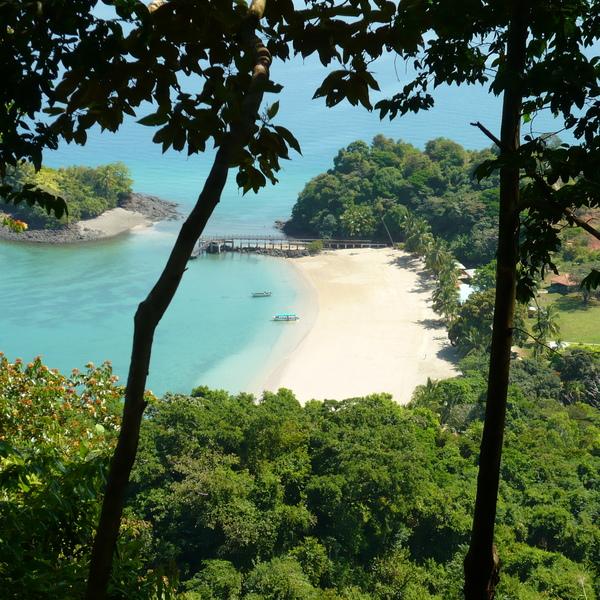 Vue à travers les arbres sur une baie avec une plage