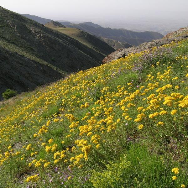 Les pentes d'une montagne couvertes de fleurs