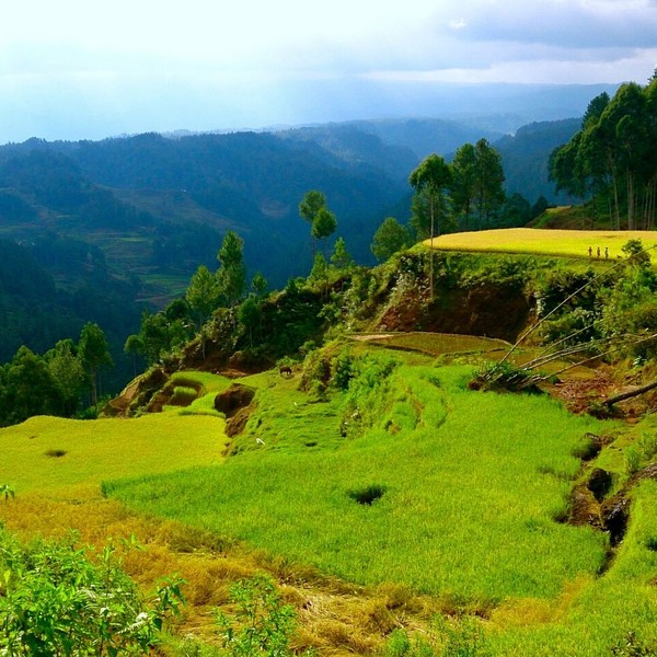 Cultures en terrasse et montagnes