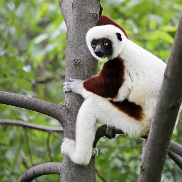 Andasibe and its lemurs