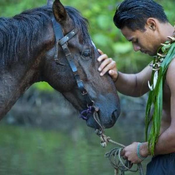 Un Polynésien face à un cheval