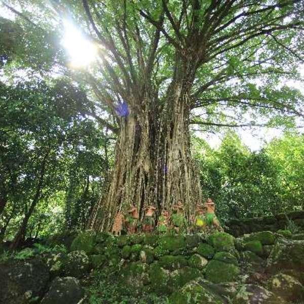 Les arbres de l'île de Nuku Hiva dans les Marquises