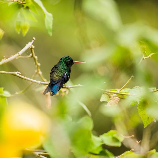 Oiseau-mouche sur une branche
