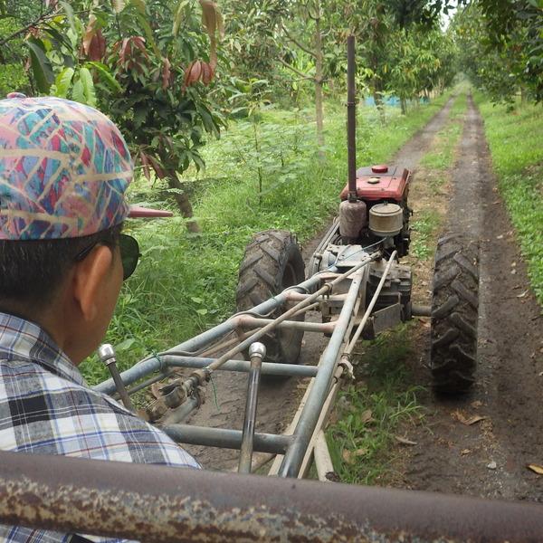Vue subjective à bord d'une charrette, aux côtés d'un agriculteur conduisant dans un verger