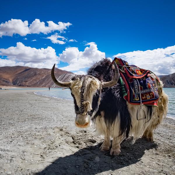 Das Bild zeigt die Region Ladakh.