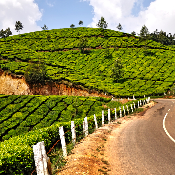 Munnar in India