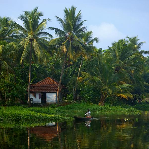 Un homme en barque sur un canal bordé par une forêt de cocotiers