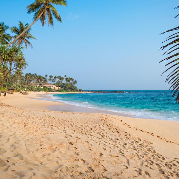 Das Bild zeigt einen wunderschönen Sandstrand mit hohen Palmen.