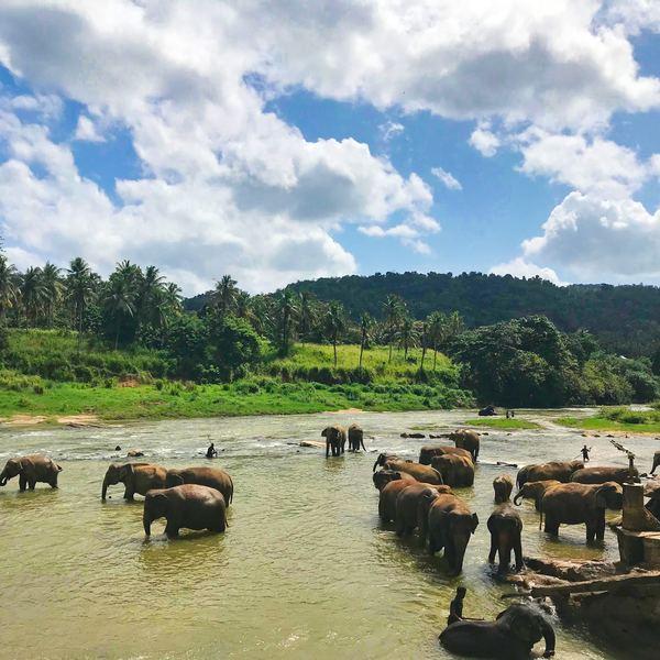 Baño de elefantes.