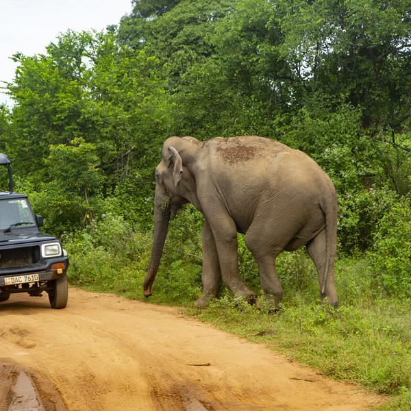 Rencontre d'un éléphant lors d'un safari