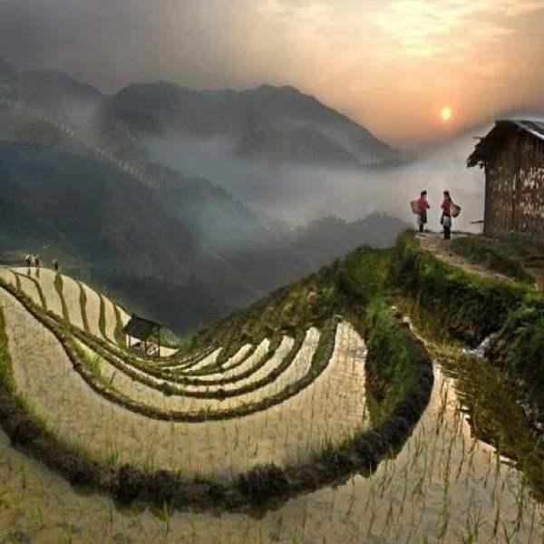 Les rizières de la Cordillera, patrimoine de l'UNESCO aussi belles vertes que mirroir. Idéales pour les marcheurs comme pour une courte découverte!