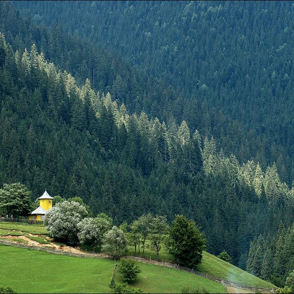 Petite église jaune au milieu de la forêt