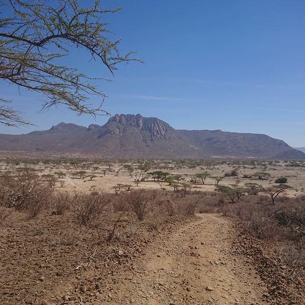 Piste à travers la savane avec massif montagneux à l'horizon