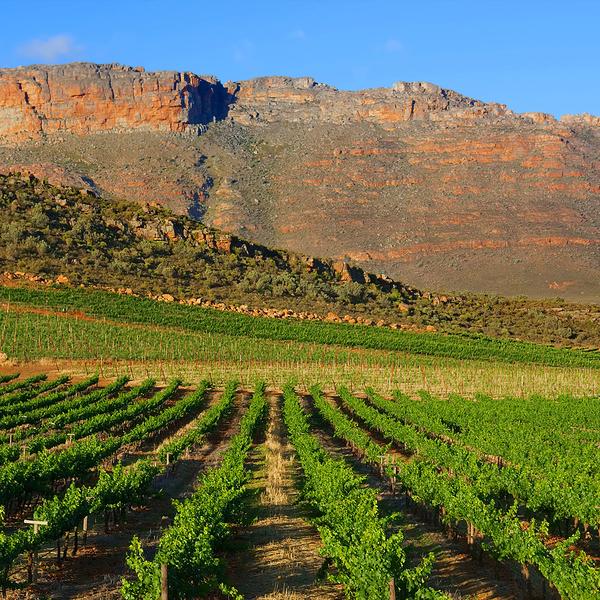 Vignobles plantés face à une falaise ocre