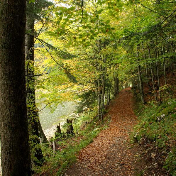 Un chemin sous les arbres le long d'un lac