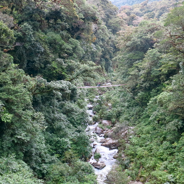 Cloud Forest around Boquete, Panama