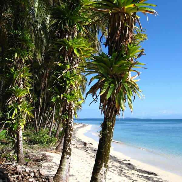 Palmiers au bord d'une plage de sable blanc et mer turquoise