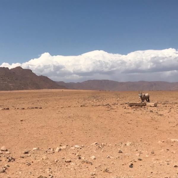 Un oryx dans un paysage désertique