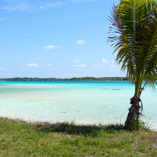 Bande herbeuse bordant une lagune à l'eau transparente