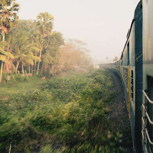 Das Bild zeigt einen Zug der durch den Indischen Dschungel fährt.