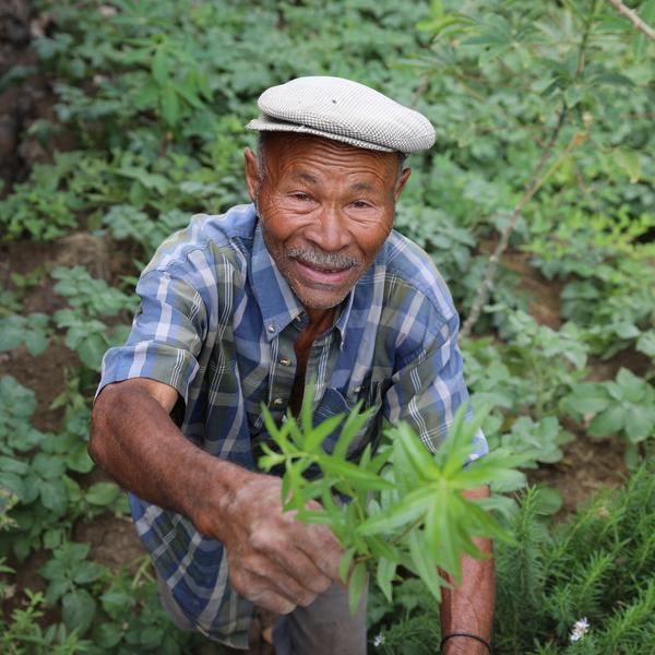 Un vieil homme offrant une plante