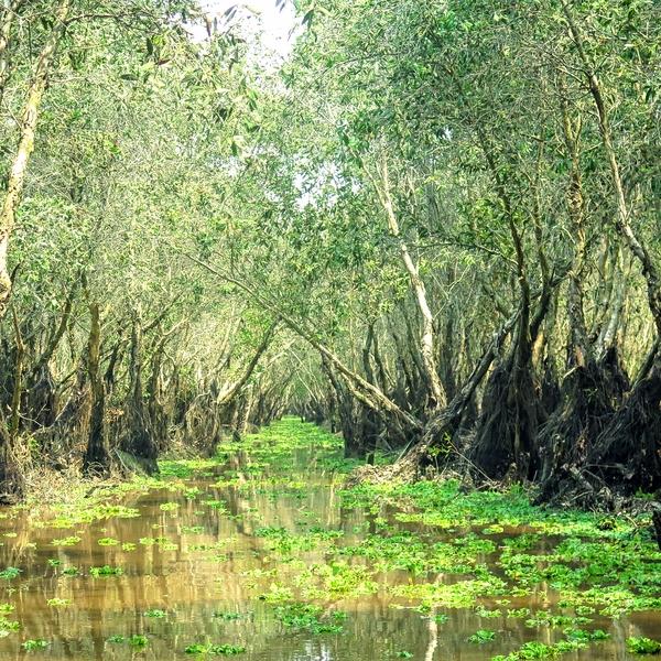 Un canal couvert de jacinthes d'eau, des fleurs de lotus dans la forêt inondée de Tra Su