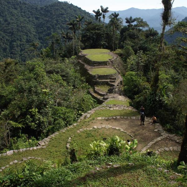 Terrasses entourées de palmiers au coeur de la jungle