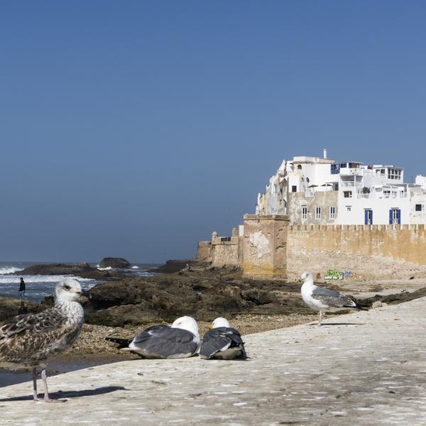 Das Bild zeigt die Mauer von Essaouira.