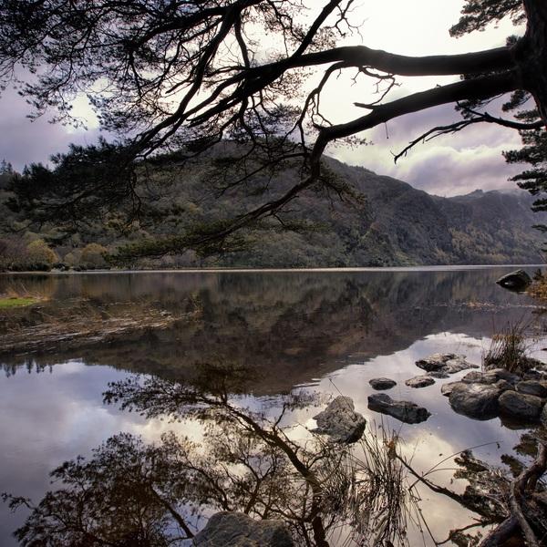 Vue sur un lac entouré de forêts