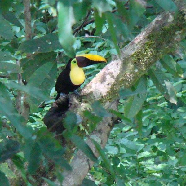 Boca Tapada, hors sentiers battus et les observations d'oiseaux