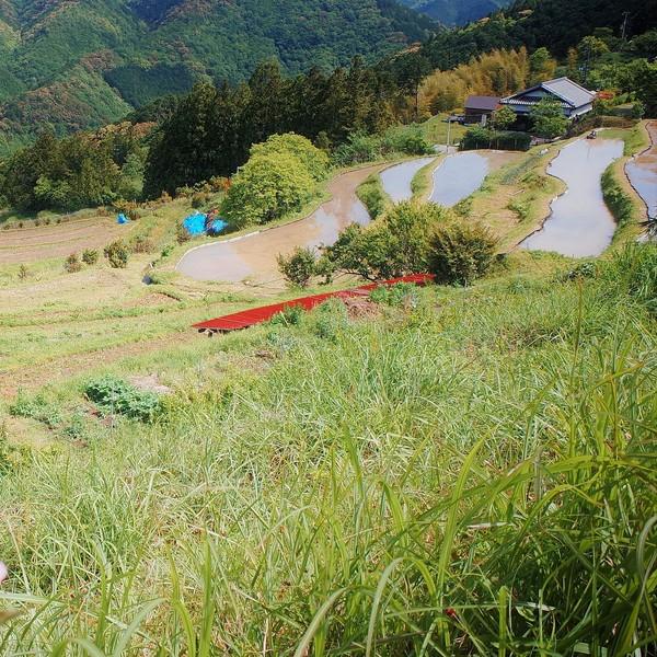 En bord de route nous admirons le paysage depuis les hauteurs de Kirinosato dans la vallée du Kii.