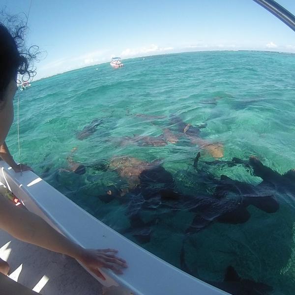 Voyageurs à bord d'un bateau observant les silhouettes des requins sous la surface de l'eau