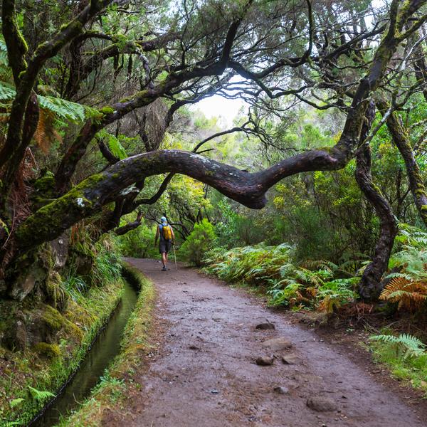 Chemin de randonnée presque envahi par des branches d'arbre tortueuses