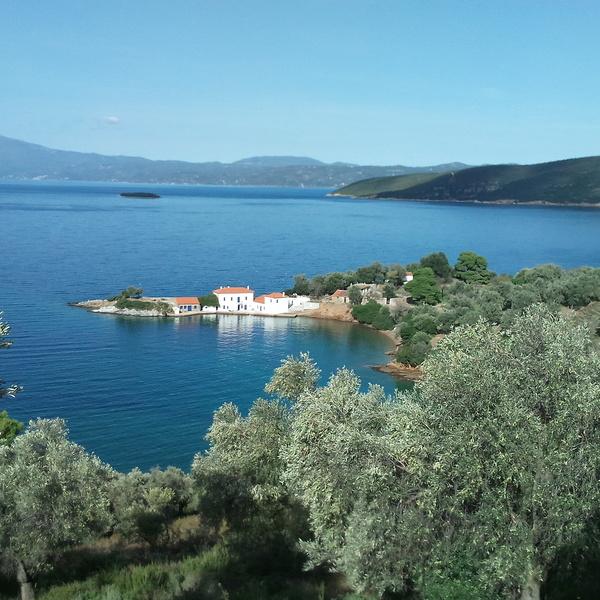 Champ d'oliviers sur les flancs du mont Pélion face à la mer