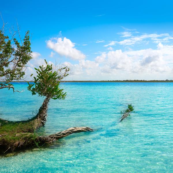 Hier sehen Sie feine Sandstrände und kristallklares Wasser in der Bacalar Lagune.