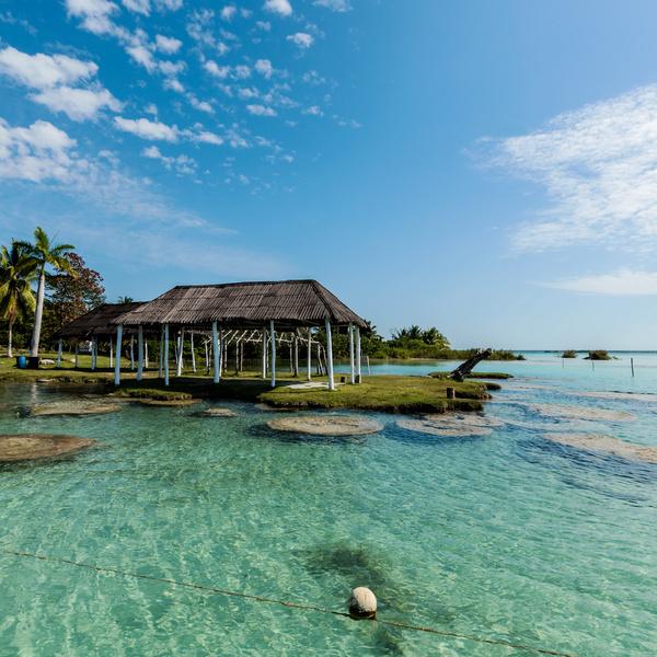 Côte couverte de palmiers baignée d'eaux transparentes