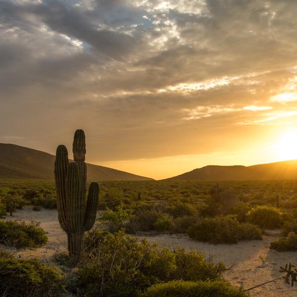 Paysage de plaine avec un cactus