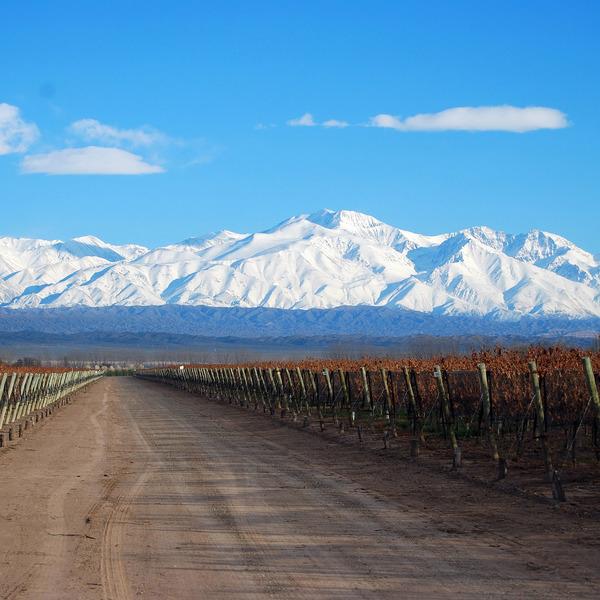 Route traversant des vignes avec montagnes enneigées à l'horizon