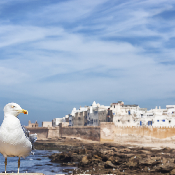 Relaxing on the Atlantic city of Essaouira, a favorite of our Agency members