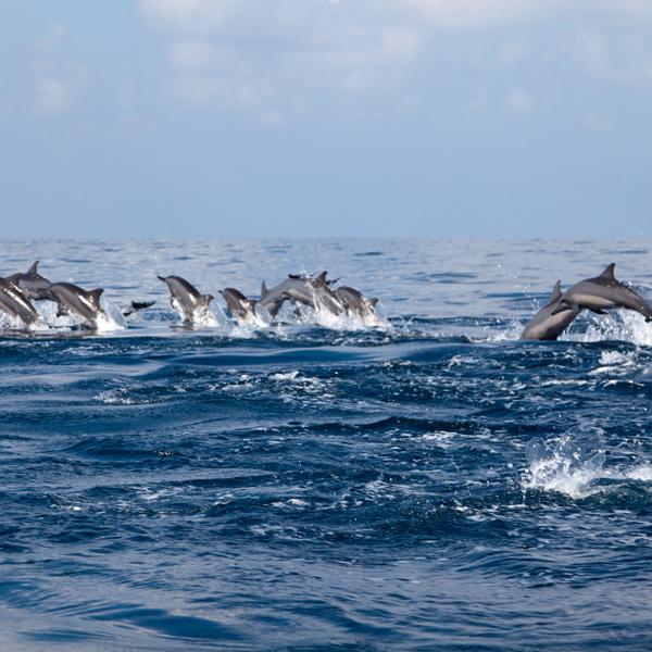 Delfin Beobachtung in Kalpitiya