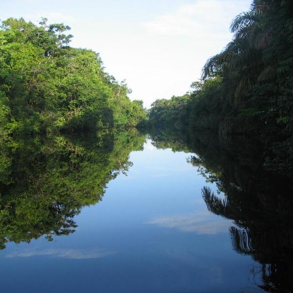 La végétation et le ciel se reflétant dans une rivière