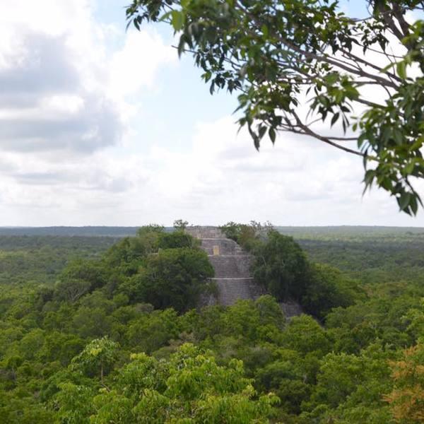 Temple maya émergeant d'une forêt touffue