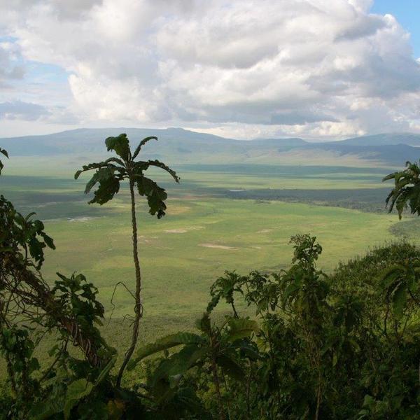 Vue panoramique sur l'immense cratère d'Ngorongoro