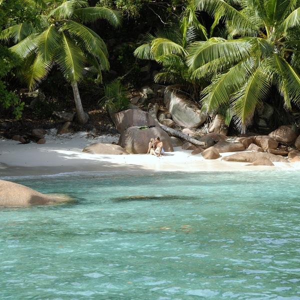 Couple sur une plage à l'ombre des cocotiers