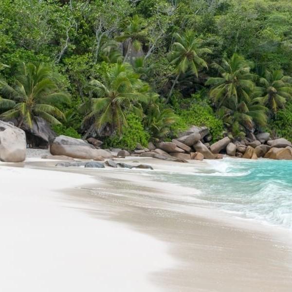 Plage de sable blanc bordée d'une forêt de cocotiers