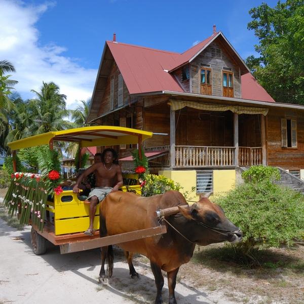 Une carriole tirée par un boeuf devant une maison créole