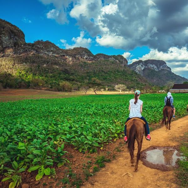 Ein Ausritt entlang der kubanischen Flora und Fauna.
