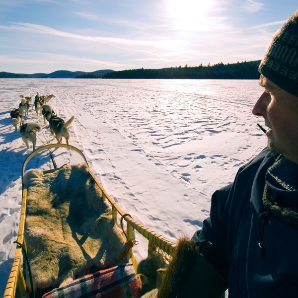 Un musher et son attelage de chiens sur une piste enneigée