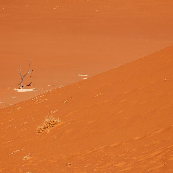 Das Bild zeigt eine Düne und tote Bäume, nahe des Dead Vlei in der Namib.