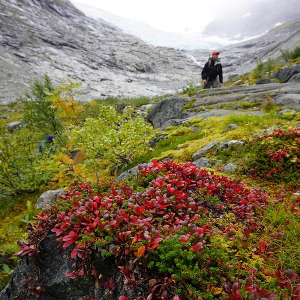 Norway Glacier Hike